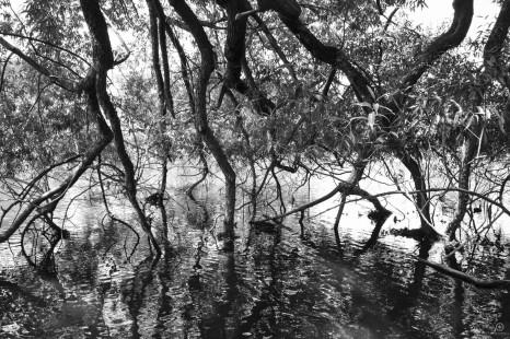 Lake Dayelsford