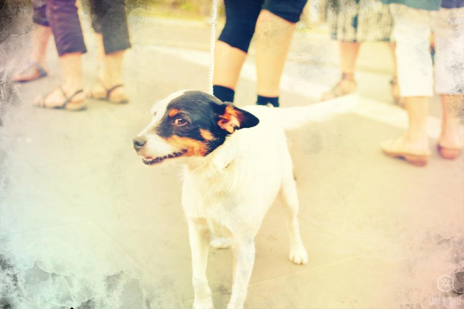 doggy-web
